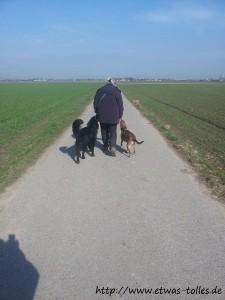 Rachel und Buddy mit Buddy-Frauchen - Spaziergang im Feld