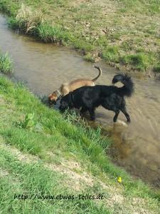 Rachel und Buddy - Wasserläufer-Jagd