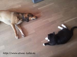 Rachel und Tabsi - hat die Katze wieder Gemeinheiten im Kopf?