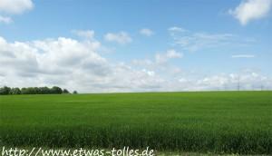 Feld am Dickopshof in Wesseling